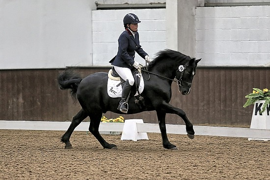 SUN BRC DRESSAGE TO MUSIC 2019